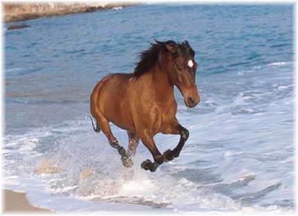 Marina il cavallo e lo stallone pt6 - 5 2