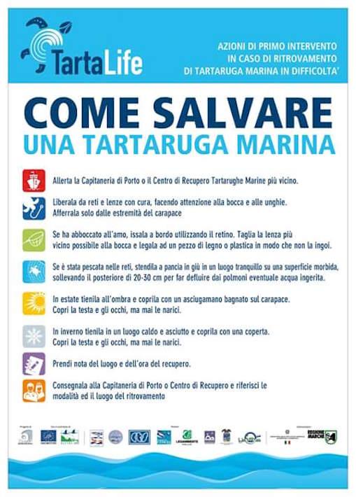 COME SALVARE LE TARTARUGHE MARINE www.lavocedemarinaio.com