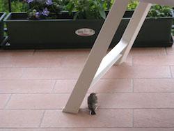 uccellino sul poggiolo - www.lavocedelmarimarinaio.com