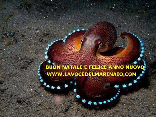 www.lavocedelmarinaio.com buon natale