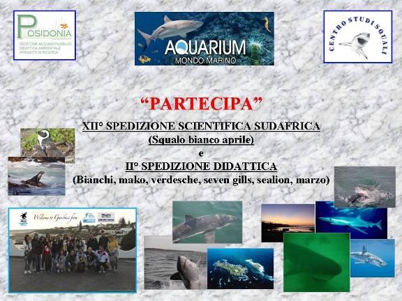 spedizioni squali anno 2015 aquarium mondo marino di massa marittima - www.lavocedelmarinaio.com